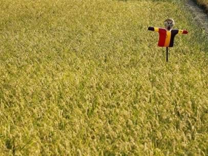 Campo de arroz en Japón