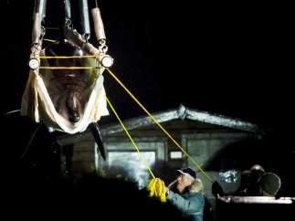 Una nueva orca para el Loro Parque