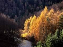 Cinco hayedos de cuento para descubrir en otoño