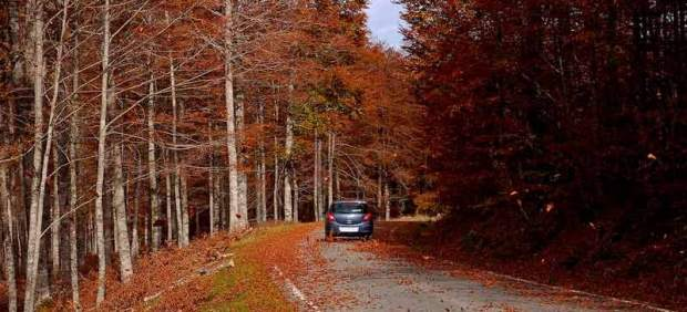 Los mejores paseos del otoño: cinco hayedos que deslumbran