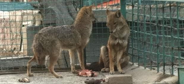 Zoo de Kabul