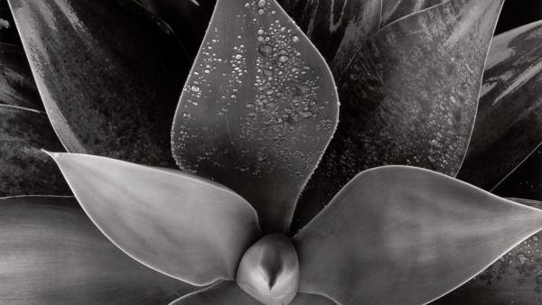 'Botanical', c. 1975