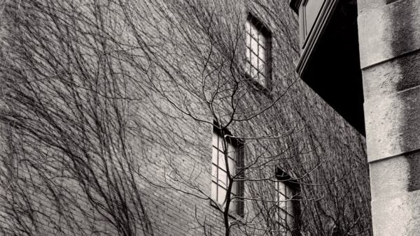 'Building, Ivy, Tree', Sutton Place, New York, 1945