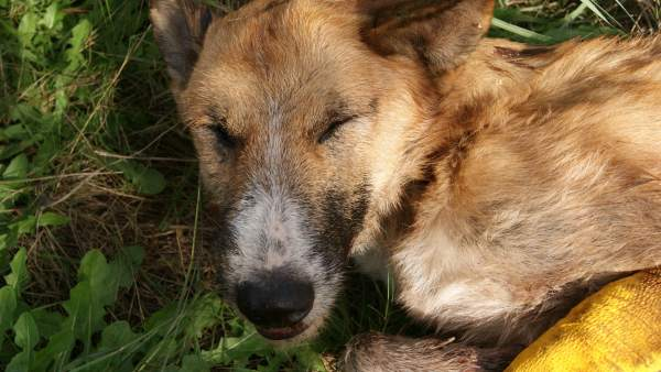 Encuentran 50 perros muertos
