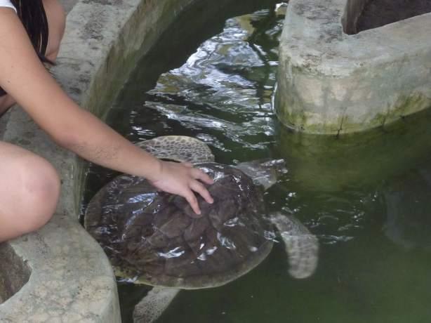 Los cazadores de tortugas marinas arrepentidos luchan hoy for Estanque de tortugas