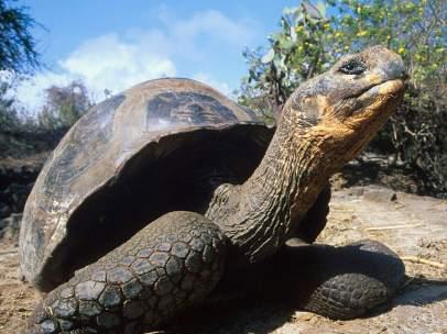 Tortuga gigante