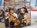 Perros con destino a Vietnam