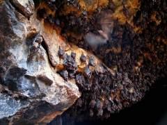 Descubren dos especies de murciélagos en Panamá y Ecuador