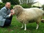 La oveja Dolly y su creador