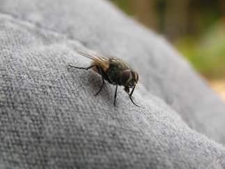 Una mosca