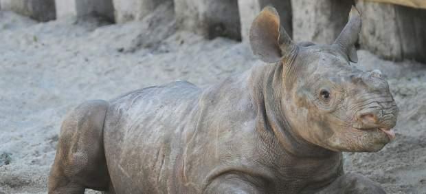 Los humanos están exterminando al resto de mamíferos (y los animales poco pueden hacer para ...