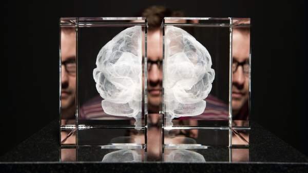 Un modelo matemático para entender cómo se produce la toma de decisiones en el cerebro