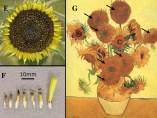 Análisis de 'Los Girasoles' de Van Gogh