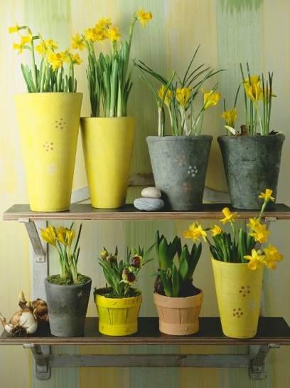 C mo mantener espl ndidas nuestras plantas de interior - Decoracion plantas interior ...