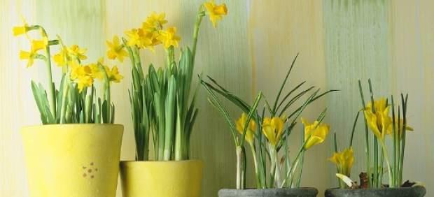 Plantas Con Flor De Interior. Unid Decoracin Simulacin Pequeo Bonsai ...