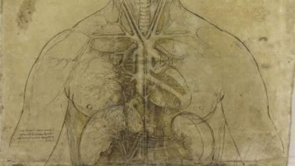 Los dibujos sobre anatomía humana de Leonardo da Vinci ven la luz