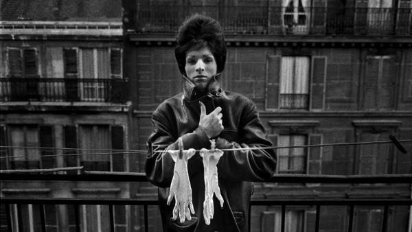 'Pepita, 1963'