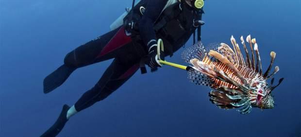 http://nationalgeographic.es/animales/peces/pez-leon