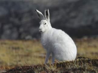 Fauna del Ártico