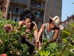 Contra el cambio climático, jardines en las azoteas