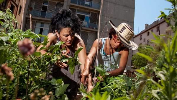 Mujeres en un huerto urbano de Barcelona