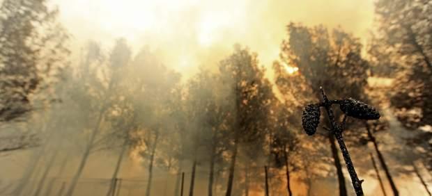 El fuego arrasa sin control miles de hectáreas en Valencia y afecta a varios municipios 67533-620-282