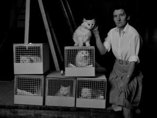 Los gatos de Blofeld