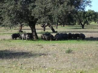 Dehesas de Extremadura