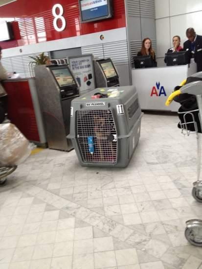 No sin mi mascota las aerol neas m s y menos amigas para for Veterinario di punto di cabina