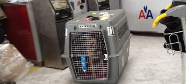 No, sin mi mascota: las aerolíneas más y menos amigas para volar con nuestros animales