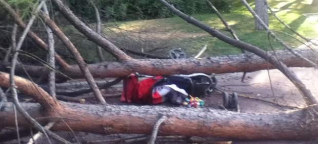 Árbol caído en el zoo de Madrid