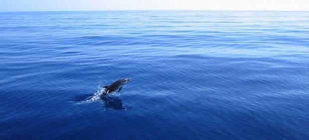 Avistando ballenas y delfines en Mazarrón, en la costa de Murcia