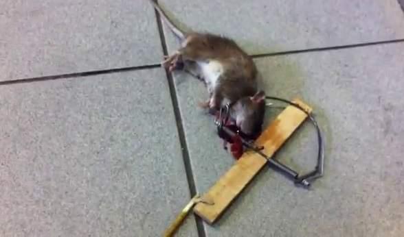 Los bomberos de Villaverde denuncian el estado de su cocina, con ratas y cucarachas