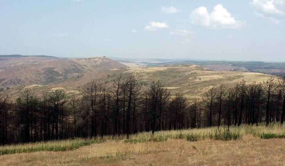 Las siete vidas de un bosque incendiado  20minutoses