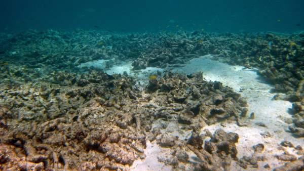 Las amenazas de la Gran Barrera de Coral