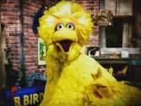 Big Bird, de Barrio Sésamo, en la campaña en EE UU