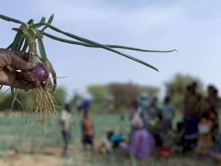 870 millones de personas pasan hambre