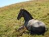 Los caballos pueden saber si estás enfadado o alegre