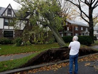 'Sandy' arranca árboles