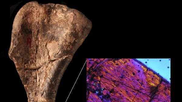 El dinosaurio más antigo descubierto
