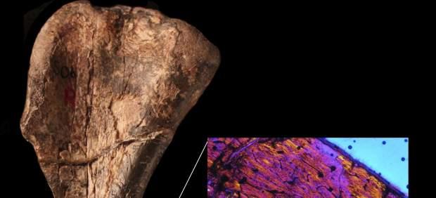 El dinosaurio m�s antigo descubierto