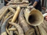 La mayor confiscación de marfil en Malasia