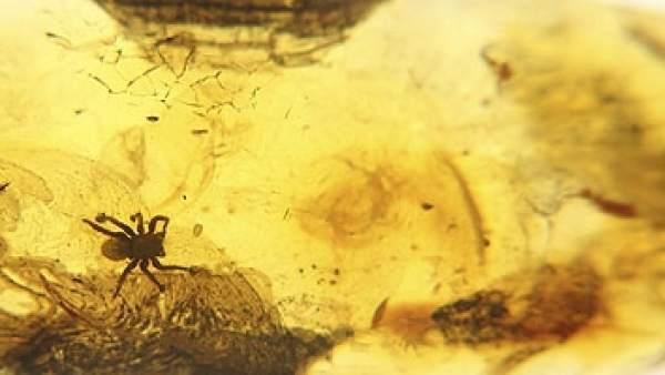 Arañas: 300 millones de años sin variar su anatomía
