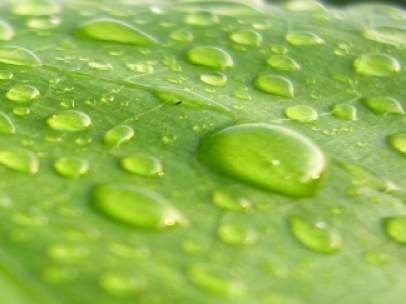 Algas para producir biodiésel