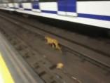 El galgo perdido en el Metro