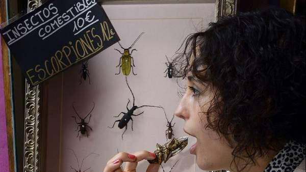 Tapas de insectos en Valladolid