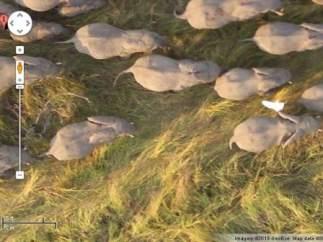 Estampida de elefantes