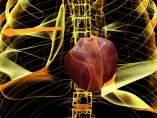 Corazón humano