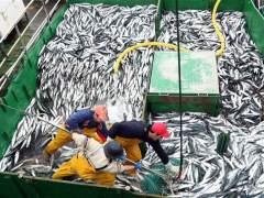 Nueva regulación de la FP para el sector marítimo-pesquero