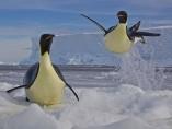 Pingüinos revoloteando